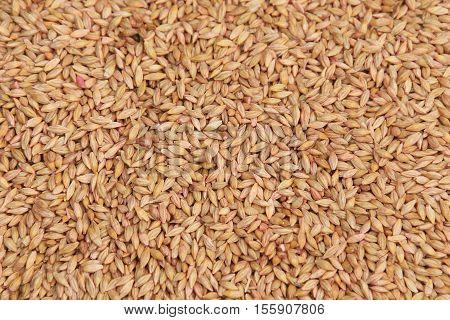Selected Grain
