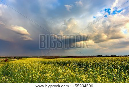 rape field under heavy clouds before thunderstorm