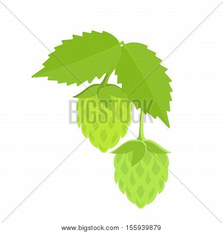 Green hops plant on white background. Colorful sketch of hops plant. Cartoon illustration of green hops plant. Hops plant for brewing. Vector.