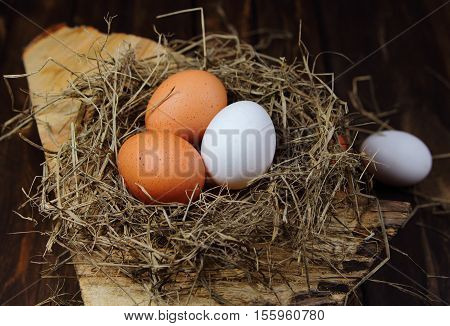eggs in a nest on the stump