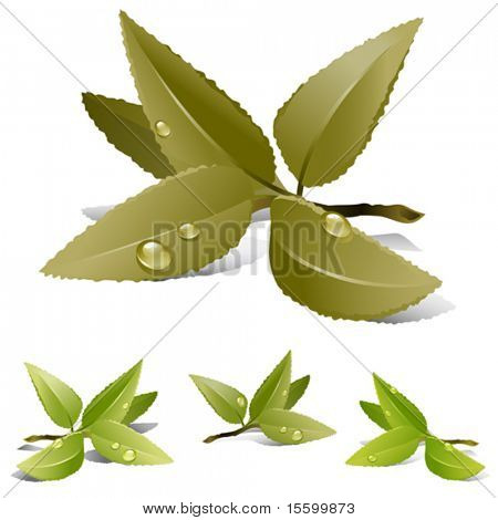 vector illustration of tea leaves