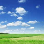 green field and  blue sky,