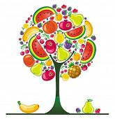 Different types of delicious fruits combined in round tree shape. To see similar, please VISIT MY PO