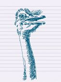 foto of ostrich plumage  - Hand drawn ostrich - JPG