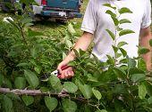 Summer Pruning poster