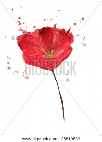 Painted watercolor poppy flower