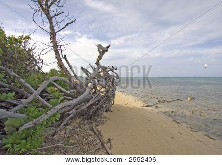Cayman Islands Drift Wood On The Beach