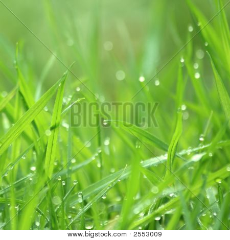 Drippy Grass