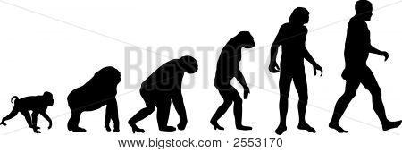 menschlichen evolution