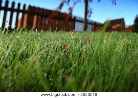 Dew Covered Lawn