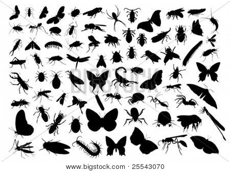 Insect silhouettes isolated on white. Vector illustration.