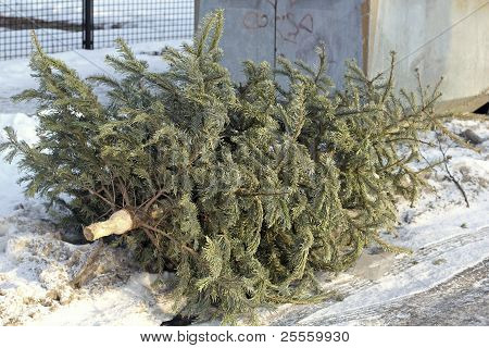 Christmas tree is put down at a bottle bank