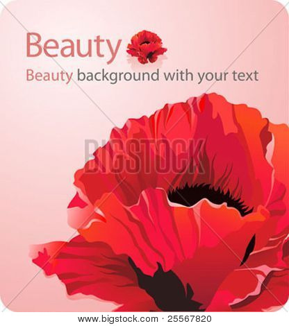 Beauty background with red poppy flower and a place for your text - forces of nature theme