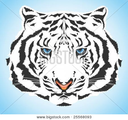 White tiger portrait - high quality vector blue eyed wild cat with pink nose and white fur