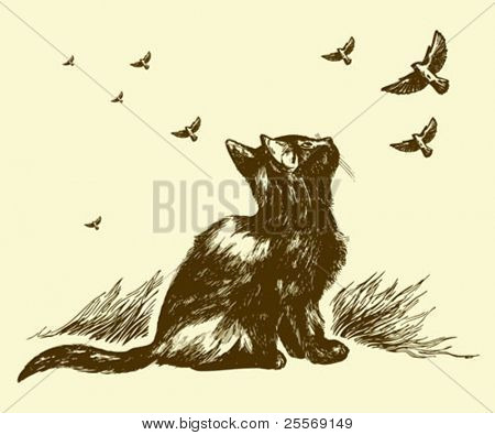 cat and birds drawing