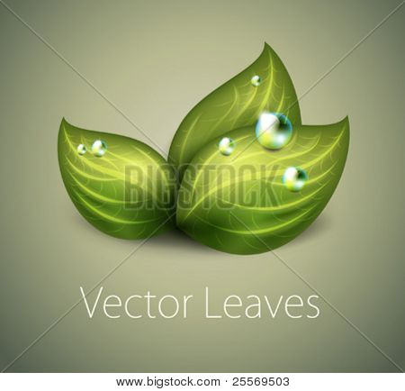 vector green leaves icon