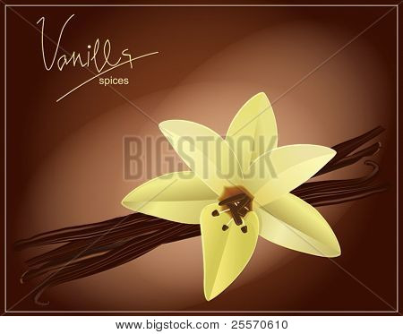 vector flower and vanilla pods on a brown background