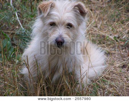 Very Good Fluffy Dog