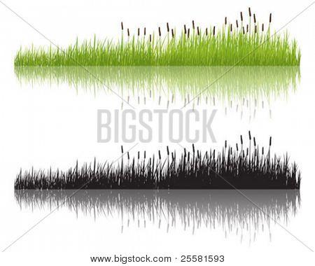 Grama de franjas, vector illustration