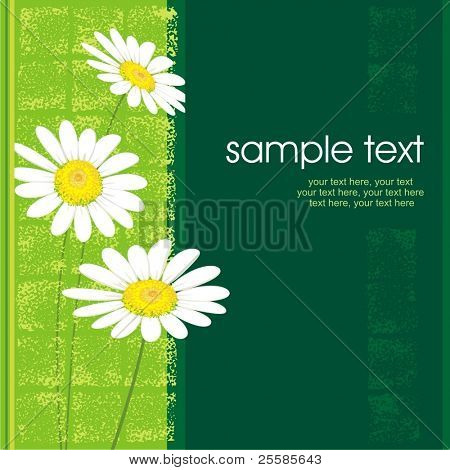 card design with camomiles and text