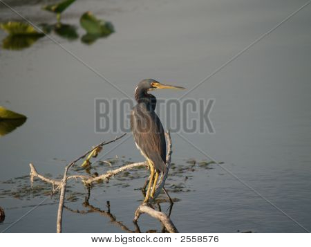 Bird On Tree Limb In Lake