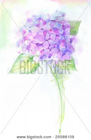 Painted watercolor hydrangea flower