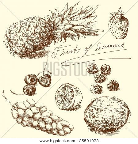 fruit - hand drawn collection, vector illustration