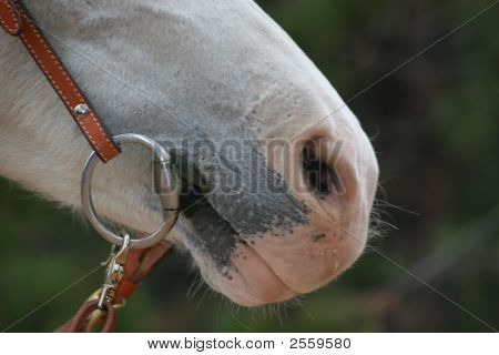 White Horse Mouth Close Up