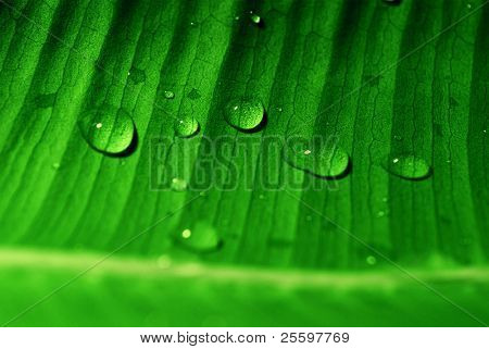 green leaf with waterdrops (see also other related images in my portfolio)