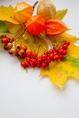 Still Life Of Colorful Leaves.autumn Still Life, Copy Space, White Background, Autumn Composition.au poster