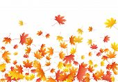 Orange Maple Leaves Background Seasonal Vector Illustration. Fall Season Specific Vector Backdrop. A poster