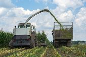 Harvest Of Juicy Corn Silage By A Combine Harvester And Transportation By Trucks, For Laying On Anim poster
