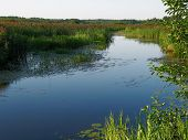 stock photo of sand lilies  - river flows on marsh valley  - JPG