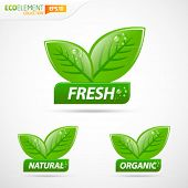 Green leafs with fresh natural and organic sign
