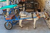 Resting donkey harnessed to the cart resting in Mijas village. Andalusia. Spain poster