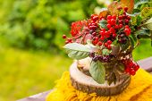 Autumn Berries, Black Berries Of Chokeberry, Rowan Berry And Yellow Scarf On An Old Garden Bench. Au poster