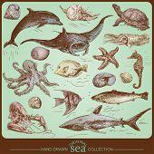 Постер, плакат: Коллекция моря оригинальные рисованной набор
