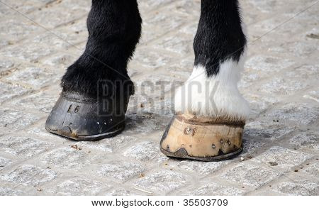 Horse's Hooves
