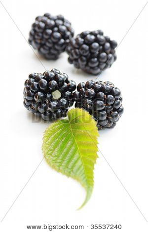 dewberries (blackberries) and green leaves