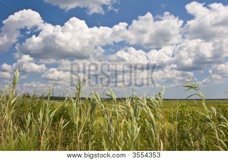 Wetlands And Reeds