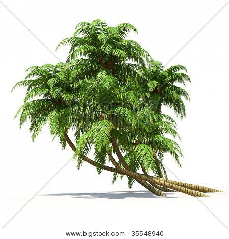 Palmtrees isolated on white. Multiuse nature collection.