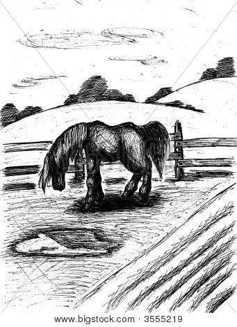 Pferd zu Sidebar Weiden