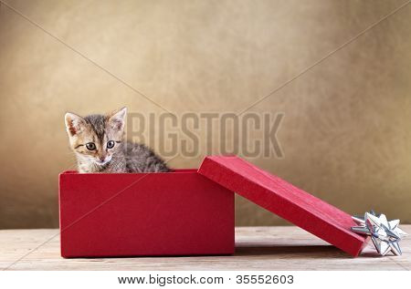 A kitten for present - young cat peeking out of a gift box, copy space