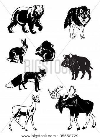 Europe Wild Animals Black And White