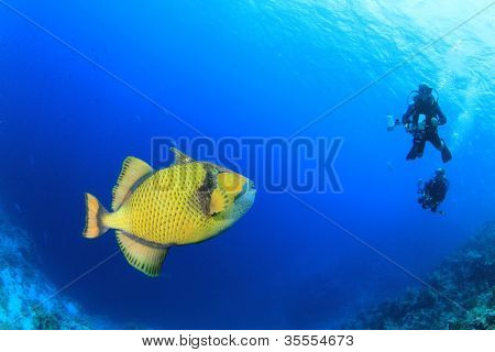 Titan Triggerfish and Scuba Divers