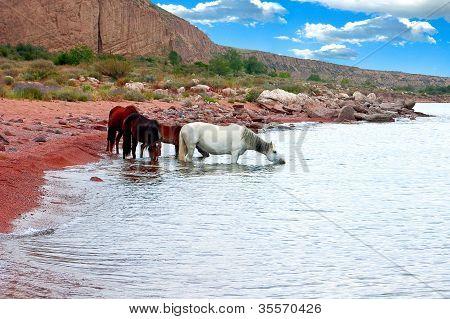 Horses Drink