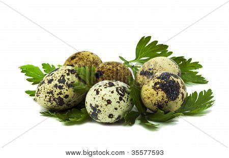 Quail eggs ready to Easter isolated on white background