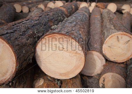 Pile Of Pine Logs