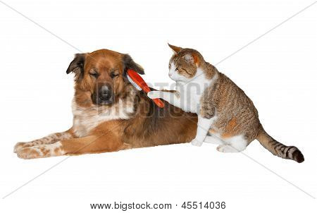 Cat Brushing A Blissful Dog