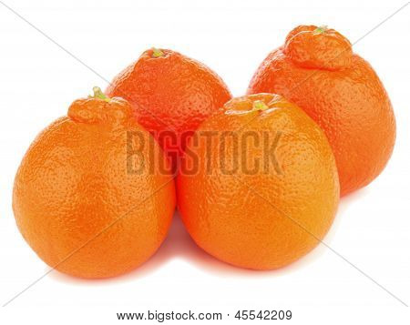 Ripe Mineola Fruits Isolated On White Background.